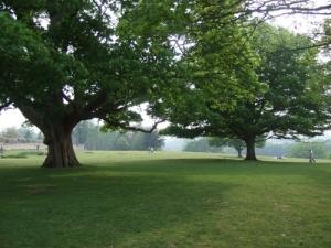 The Park at Knole, Sevenoaks, Kent
