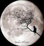 Samhain Blessings!